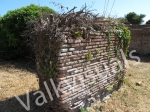 grown-over-wall_03